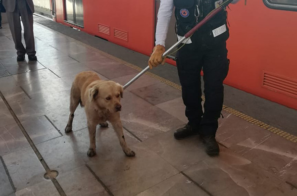 El rescate del perro ocasionó marcha lenta en la Línea B.  FOTO: @MetroCDMX
