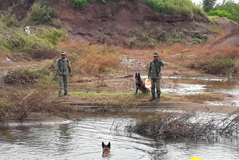 De acuerdo con información de la Sspytm, se registró un ataque de cocodrilo a uno de los kayaks que está realizando búsquedas