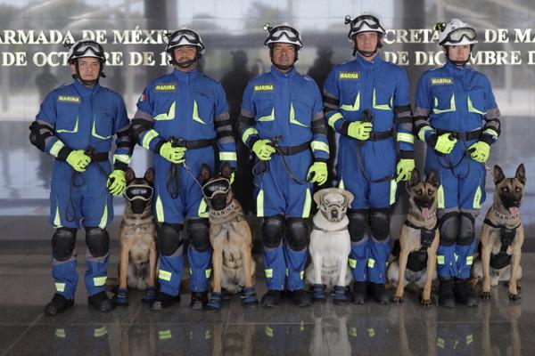 El fotógrafo mexicano retrató a los perros rescatistas. FOTO: @Santiago_Arau