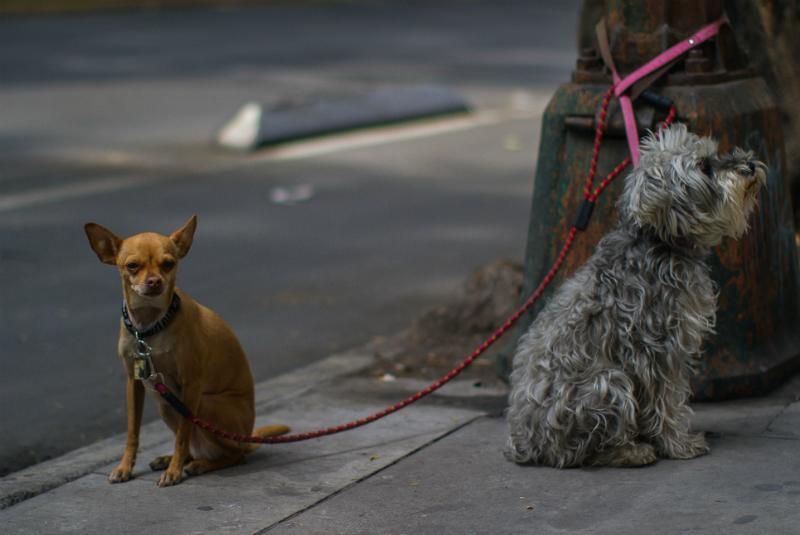 En cuanto a los perros y gatos pequeños, sus reservas calóricas son menores y sus cuerpos resienten las bajas temperaturas FOTO: Cuartoscuro