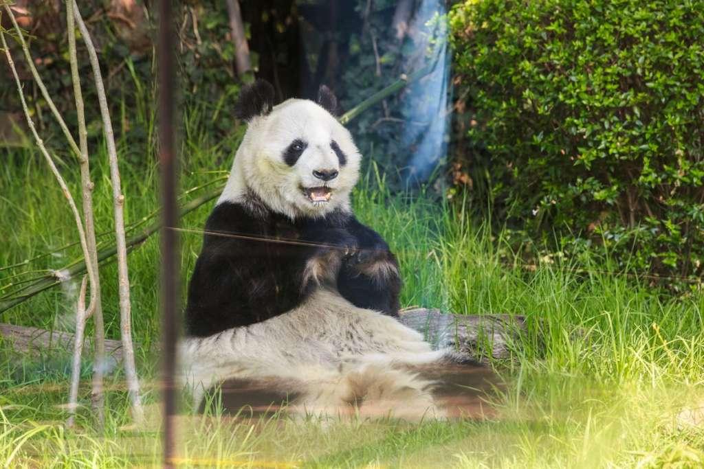 Rojo de la Vega agregó que con el modelo actual los zoológicos sólo enseñan al público a interferir y mantener en cautiverio a los animales