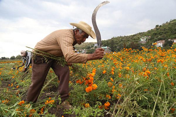 El dinero heredado es para impulso del campo y para los pequeños productores FOTO: CUARTOSCURO