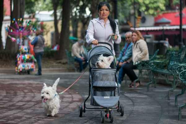 La app le regala una placa al can si su dueño se registra. Foto: Archivo | Cuartoscuro