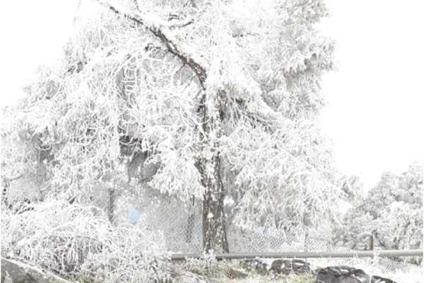 Vecinos del municipio publicaron en redes sociales videos e imágenes de la nevada registrada este día en el municipio y reportan la suspensión de la energía eléctrica.