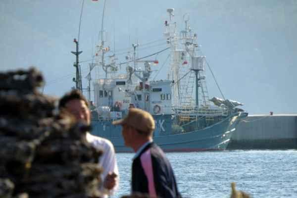 Japón retomará públicamente la caza con fines comerciales, como ya hacen Islandia y Noruega. Foto: Archivo | Cuartoscuro
