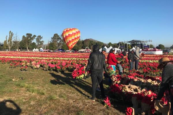 Participan 200 jardineros. FOTO: ESPECIAL