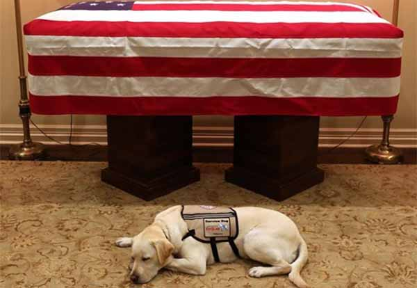 El perro labrador recibió su nombre por el piloto comercial Chesley
