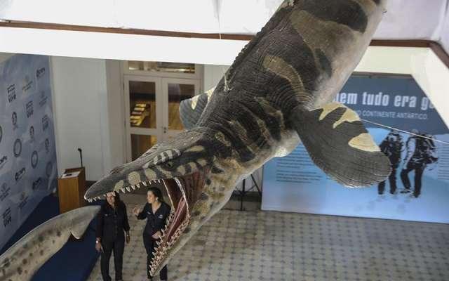 El museo contaba con colecciones de paleontología, antropología y arqueología, con aproximadamente 20 millones de piezas que en su mayoría se perdieron en el siniestro
