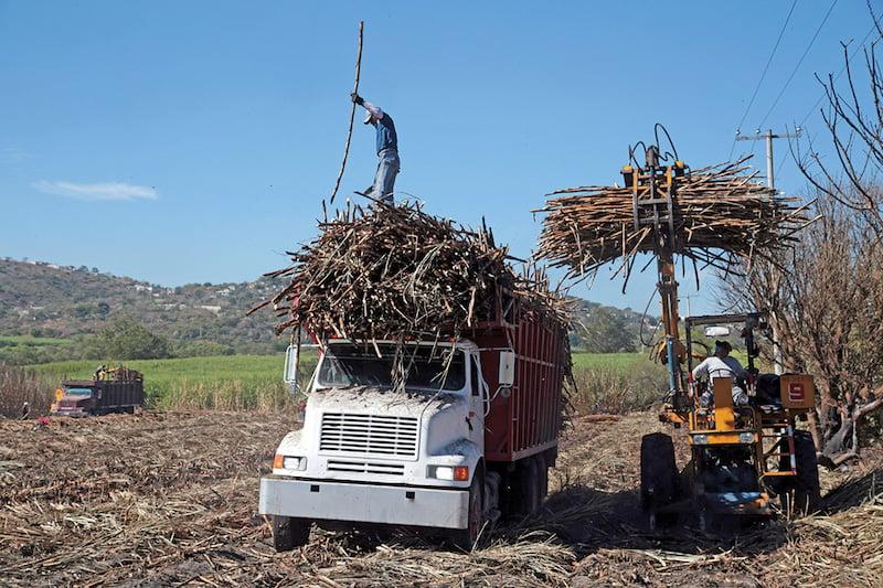 ESCENARIO. Agricultores buscan quitar la presión sobre la oferta nacional e impulsar los precios. FOTO: MARGRITO PÉREZ RETANA /CUARTOSCURO.COM