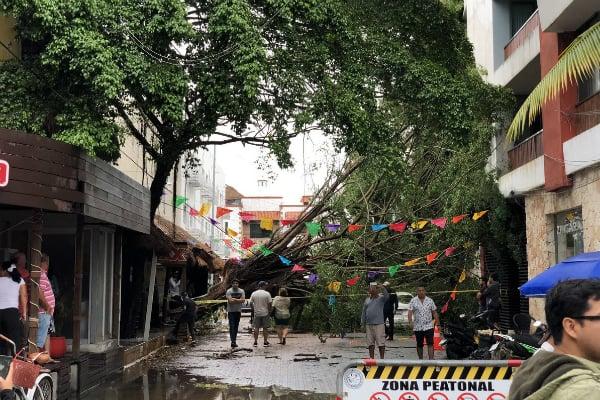 En el municipio de Solidaridad los estragos fueron evidentes en la Quinta Avenida