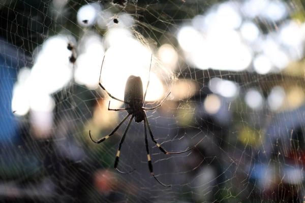 Las fobias más comunes sonlas arañas, viajar en avión, los perros, espacios cerrados o hablar en público. Foto: Archivo | Cuartoscuro