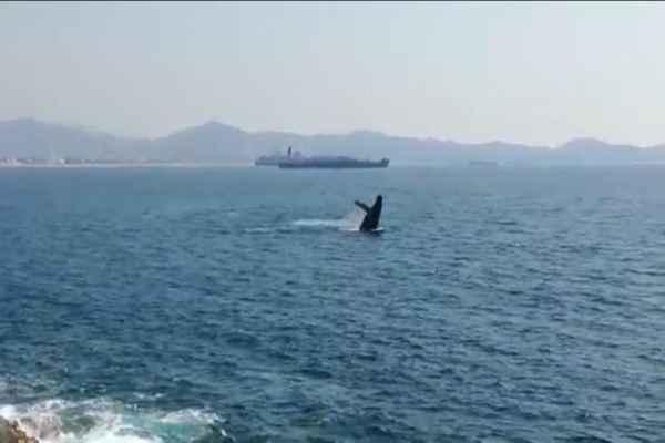 El periodo de avistamiento de ballenas es de octubre a abril, aunque en enero también son frecuentes. Foto: Especial
