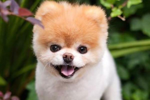 perro_bonito