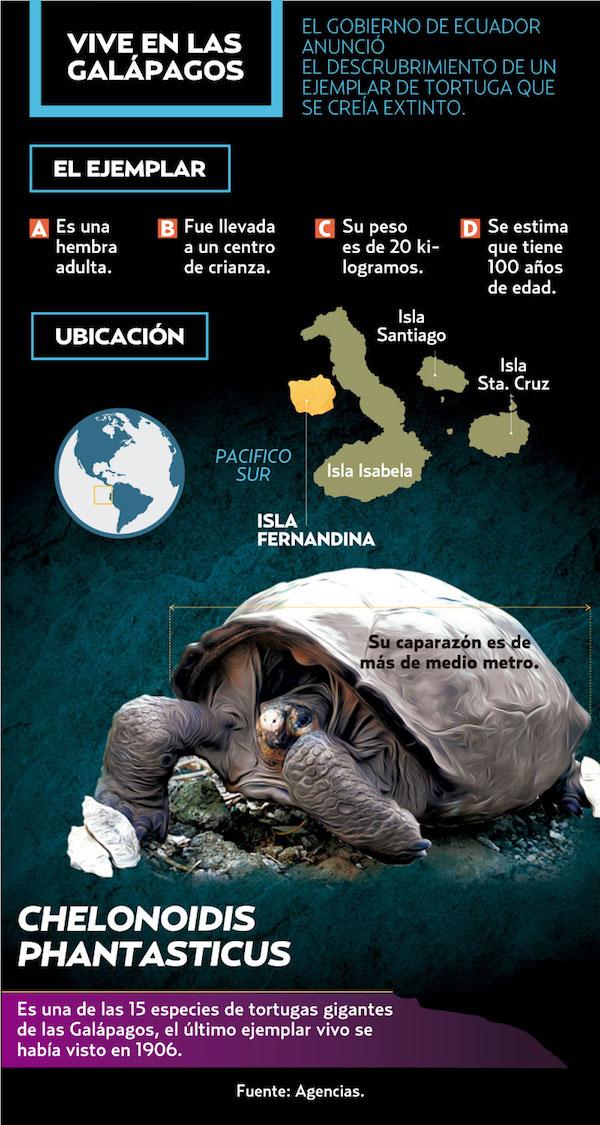 tortuga_galapagos