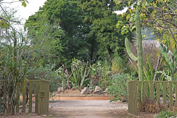 Con 10 hectáreas de vegetación, el Jardín Botánico es no sólo el corazón verde de la ciudad, sino también espacio de encuentro para la convivencia y la práctica del deporte