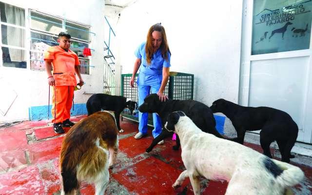 Los animales fueron entregados por la Procuraduría del Medio Ambiente del Edomex. FOTOS : NAYELI CRUZ