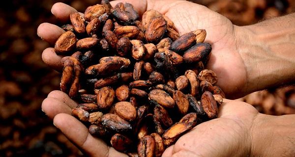 La Fiesta Nacional del Chocolate tendrá lugar hasta el 17 de febrero, un evento que reúne a más de 42 expositores, proveedores y productores de chocolate tanto se San Luis Potosí como de diversos estados. Foto: Especial