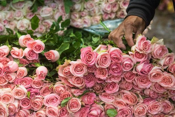 80 % de la producción de flores esta en el Estado de México. FOTO: ISAAC ESQUIVEL /CUARTOSCURO.COM