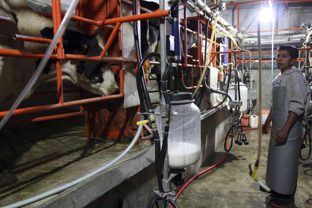 Productores de leche