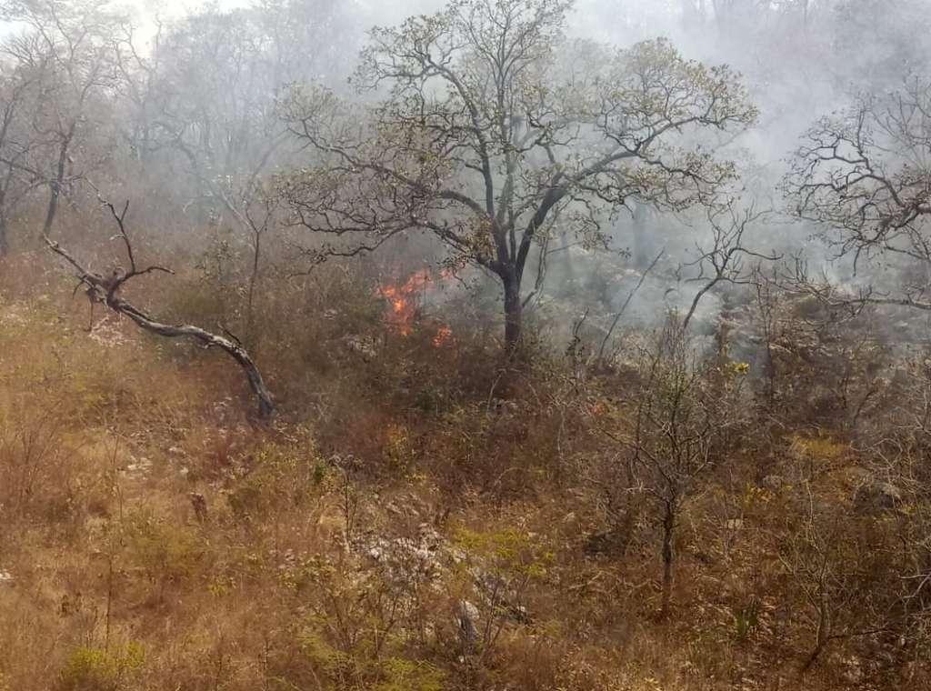 Las llamas además afectaron 40 hectáreas de pasto en potrero, aunque la Comisión aseguró que tienen controlado el 50 por ciento del incendio con 64 combatientes. Foto: Especial