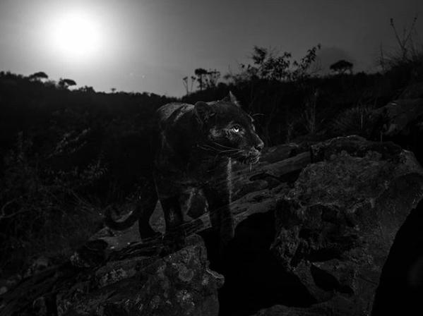 La presencia de este animal era un rumor entre los pobladores y visitantes del parque natural en Kenia
