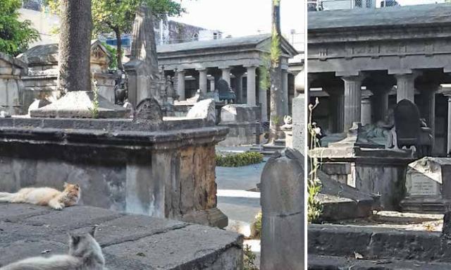 La tumba del Benemérito de las Américas está resguardada por varios felinos que viven ahí. FOTO: ESPECIAL