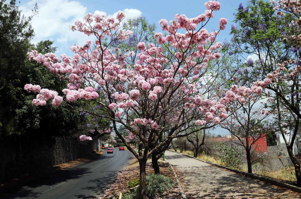 La primavera llegará este miércoles 20 de marzo a las 15:58 horas. Foto: Cuartoscuro