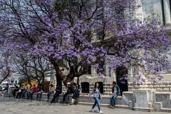 La Primavera terminará el viernes 21 de junio. Foto: Archivo   Cuartoscuro