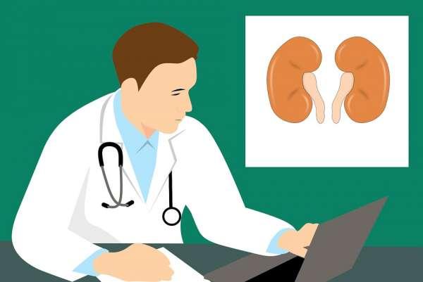 Las personas que viven con un riñón pueden llevar una vida plena y completamente normal, de acuerdo con la National Kidney Foundation. Foto: Pixabay