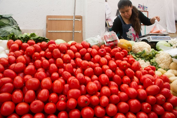 México cerró el año pasado con exportaciones récord de más de 2 mil 200 millones de dólares en jitomate, más de mil 900 millones de dólares a Estados Unidos, país donde la mitad de los jitomates que se consumen provienen de este país. Foto: Cuartoscuro