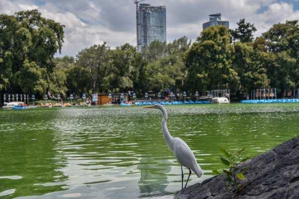 El proyecto del Bosque de Chapultepec estará a cargo de Gabriel Orozco. Foto: Archivo | Cuartoscuro