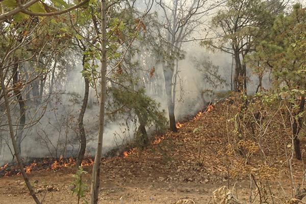 El fuego se combate con ayuda de 7 helicópteros. FOTO: CUARTOSCURO