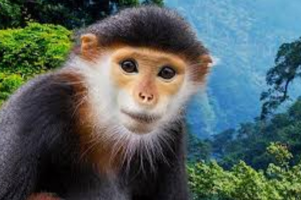 La especie es considerada en peligro de extinción. FOTO: ESPECIAL