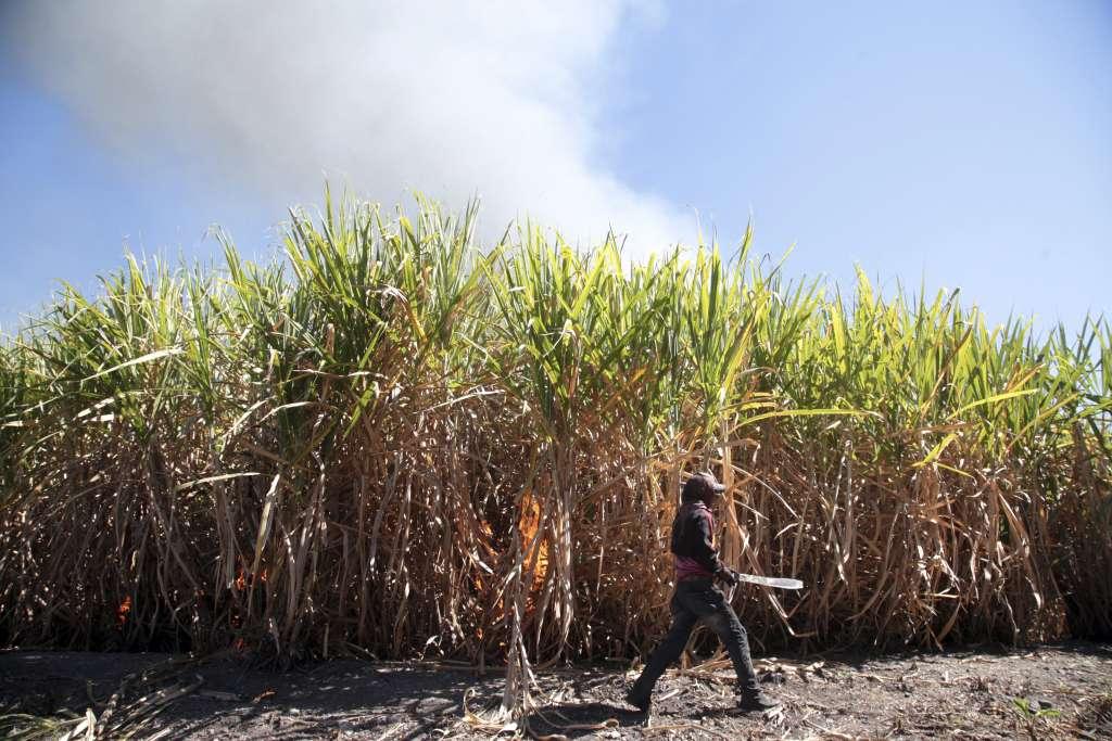 Renovar las plantaciones permitirá aumentar los rendimientos. FOTO: Cuartoscuro