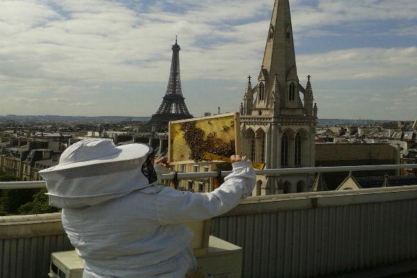 200 mil abejas sobreviven a incendio en Notre Dame. Foto de twitter @Beeopic