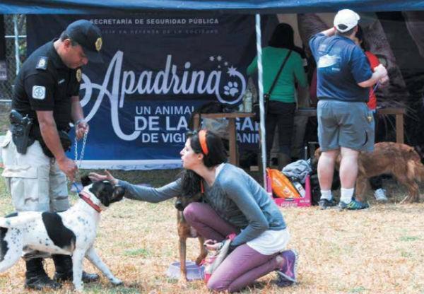 INVOLUCRADOS. La Brigada tiene un programa para apadrinar animales y pasar tiempo con ellos sin adoptarlos. Foto: Cuartoscuro
