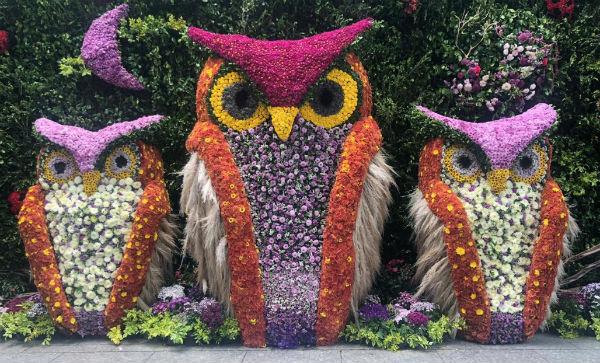 Por cuatro días, millones de flores, la mayoría mexicanas, apocarán con su belleza. Foto: Especial