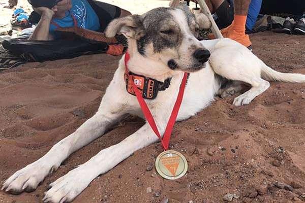 De acuerdo con la organización Maratón des Sables, el perro fue recibido en el campamento donde pasó la noche y fue rehidratado con el agua para los corredores.