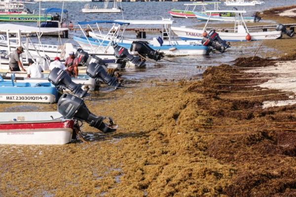 La llegada del sargazo se ha incrementado en consecuencia a los efectos de la contaminación y el calentamiento global. Foto: Cuartoscuro