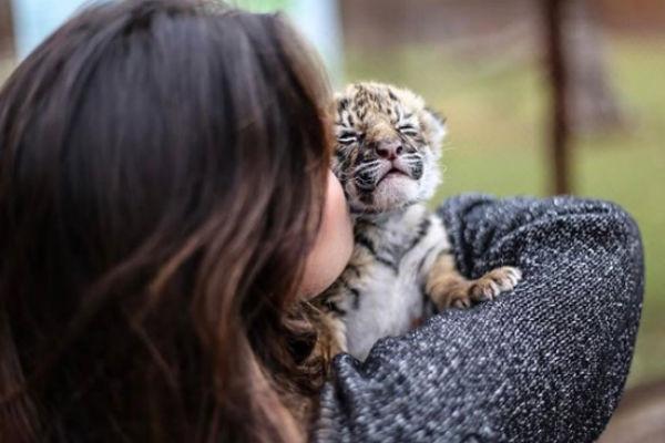 Paulina Peña se considera una amante de los leones. Foto: Instagram paaulinapepretelini
