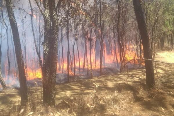 En las labores de control y liquidación del fuego participan 45 combatientes de Probosque. Foto: Especial