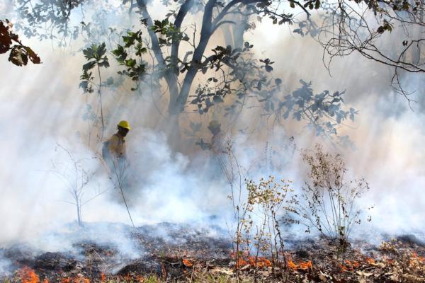 Para controlar y sofocar el fuego, trabajan 3 mil 159 elementos de distintas corporaciones. Foto: Conafor