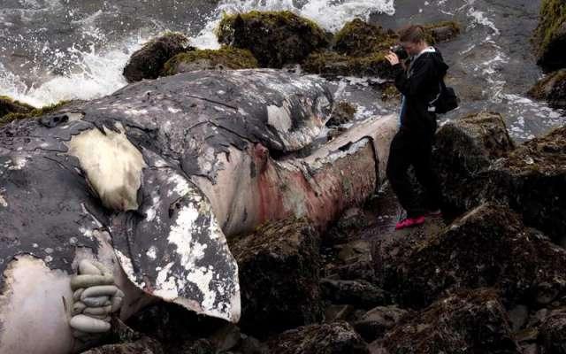 Al menos 10 cetáceos han sido hallados sin vida en lo que va de 2019. Foto: EFE