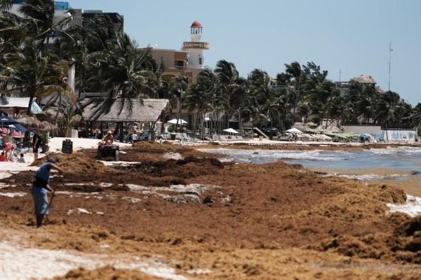 Retiro de sargazo en las playas de Quintana Roo  FOTO: CUARTOSCURO