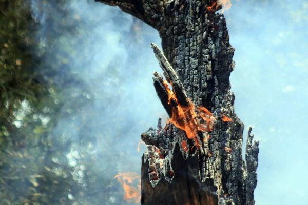 (Semarnat) reportó que se registran 104 incendios forestales en el país