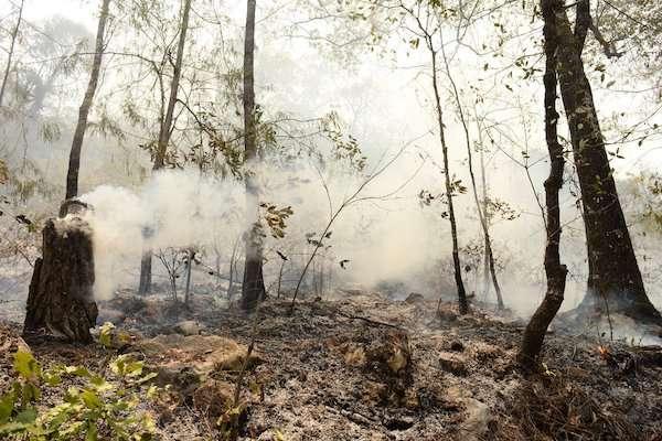 Incendio forestal en Jalpa de Serra
