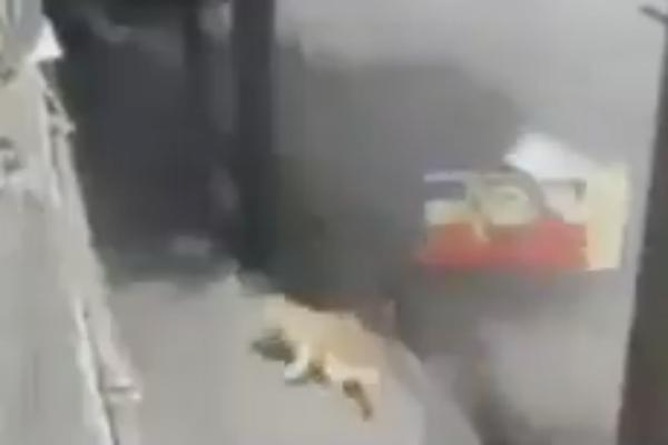 perro-carambola-santa-fe