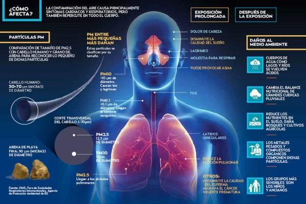 Las PM2.5 pueden cruzar la barrera pulmonar y entrar en el sistema sanguíneo. Foto: Paul D. Perdomo