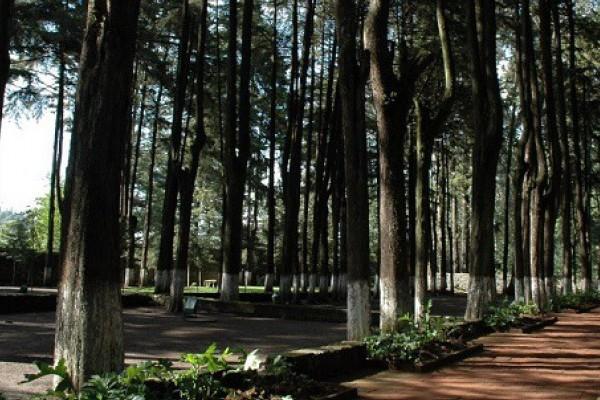 El polígono del área mencionada abarca 20 mil metros cuadrados y se encuentra a 400 metros del área natural protegida del Parque Nacional del Desierto de los Leones. Foto: Especial