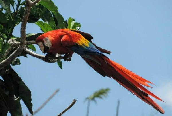 Distintas especies d enuestro ecosistema han sufrido una perdida  FOTO: /CUARTOSCURO.COM